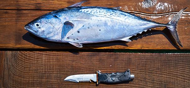 Couteau marin, plongée et pêche
